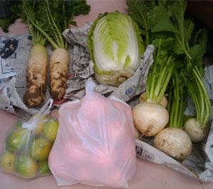 頂き物の野菜達
