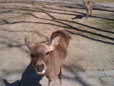 鹿に襲われた(笑)